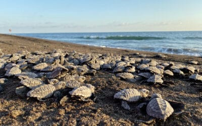 Sea Turtle Expeditions at Estación Biológica el Banco