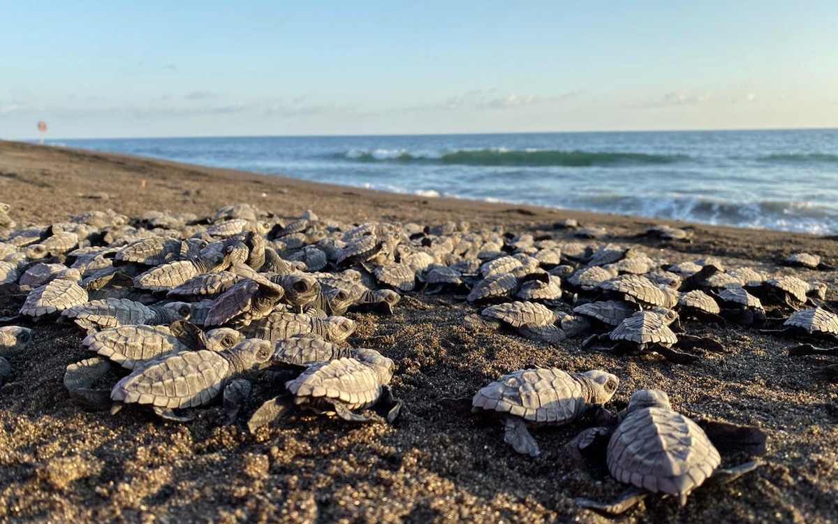 Sea turtle expeditions